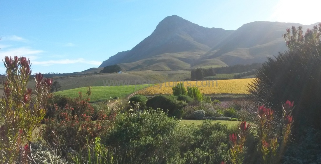 Creation winery in the Hemel-en-Aarde wine valley of Hermanus, South Africa